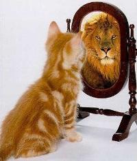 gato o leon